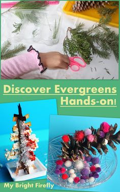 Evergreen Exploration: Preschool Nature Science. Explore Christmas Trees. Observing, measuring, and sorting needles and scales. Needles in play dough. Evergreen discovery bottles. Cones and pom poms. Grow Your Own Crystal Tree.