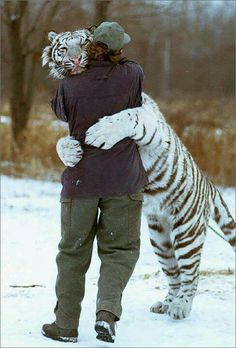 Just be happy.unless you can hug a tiger. ALWAYS hug a tiger. Cute Baby Animals, Animals And Pets, Funny Animals, Wild Animals, Funny Pets, Animals Images, Beautiful Cats, Animals Beautiful, Animals Amazing