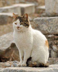 Ephesuscat3