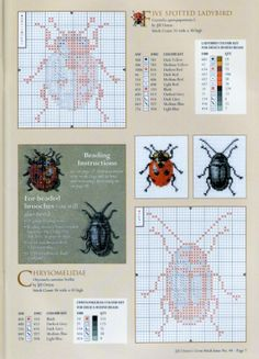 Beetle Collection 1 (3/8)