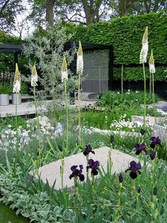 this garden (a Chelsea Flower Show winner back in 2009), with its myriad groundcovers and a smattering of 'up' plants. The tall white spiked plants are Eremurus 'Joanna' and the striking black irises are Iris chrysographes. Some of the other white flowers we can see are verbascum and stock (matthiola). The Daily Telegraph garden, designed by Ulf Nordfjell, won best in show that year