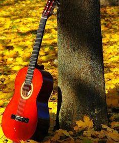 maple guitar hd wallpaper 9043
