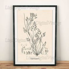 Grass print, Love grass print, Botanical illustration, Plant art, Grass art, Eragrostis, Instant download vintage botanical print, Wall art.  All grass prints: https://www.etsy.com/shop/LizasDigitalVintage?ref=hdr_shop_menu&search_query=grass  You will receive 300 dpi resolution 6 JPG images: - 2 JPG images at 8x10 inches (one with white background and one with light vintage paper background); - 2 JPG images at 11x14 inches (one with white background and one ...