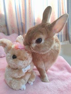 Check out my new doll! I'll call her Flower. #rabbit #rabbits #rabbitlove #rabbitlife #bunny #bunnylove #bunnylovers #bunnyrabbit #bunnylife #pet #pets #cute