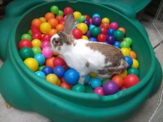 bunny playing in ball pit!