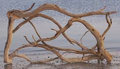 Rare driftwood gathered from the islands around N. American tropical states.