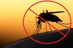 Relatório da OMS mostra que é possível eliminar a malária até 2030