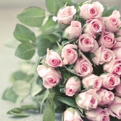 There's a type of rose for everyone in your life! But the red rose meaning, white rose meaning, yellow rose meaning, and black rose meaning are all very different. Here are all the rose color meanings you need to know. May Flowers, Flowers In Hair, Beautiful Flowers, Beautiful Days, Pretty Roses, Yellow Roses, Pink Roses, Pink Flowers, Tea Roses