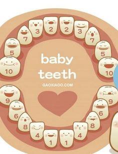 宝宝长牙的顺序