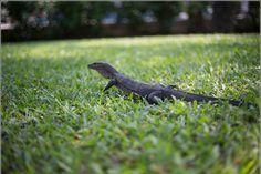 Animals at Lumpini Park Bangkok – Tour and Pictures of Lumphini Park – Bangkok, Thailand