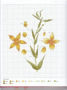 Gallery.ru / Foto n º 42 - Herbier - Mosca