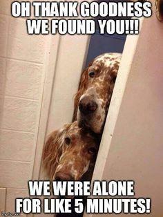 English Pointer Dog, English Setter Puppies, English Setters, I Love Dogs, Puppy Love, Cute Dogs, Beautiful Dogs, Animals Beautiful, Cute Animal Memes