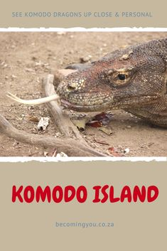 After a few days in the jungles of Borneo and another few spent in the island paradise of Wakatobi, it was on to our next destination… Labuan Bajo and the Komodo Islands. Komodo National Park, National Parks, Komodo Island, Labuan, Travelling Tips, Borneo, Asia Travel, Family Travel, Islands
