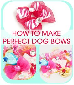 Perfect Dog Bows (Tip from a Professional Dog Groomer)
