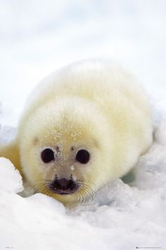 Baby seal. How could someone hurt this precious thing?