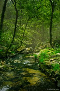 A little creek winds through a leafy forest. Following the Stream photo by Vitor Ferreira, via 500px