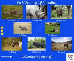 Learn Greek, Greek Language, Mammals, Elephant, Horses, Learning, School, Kids, Enterprise Application Integration