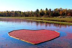 Photo of Johnston's Cranberry Marsh
