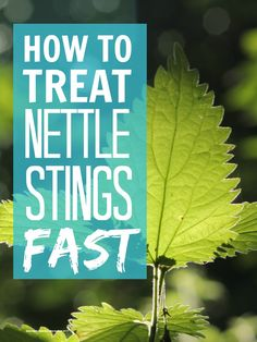 Nettle stings - how to treat nettle stings fast