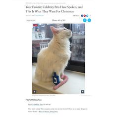 Knox is featured on PopSugar! Fido the Cat is on Knox's wish list.  Thank you so much @meow_york_kitties!