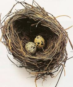 There's something very beautiful about a birds nest.