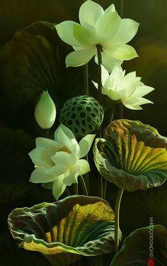 Beautiful Rose Flowers, Unusual Flowers, Amazing Flowers, Flower Images, Flower Pictures, Flower Art, Lotus Flower, Flower Backgrounds, Flower Wallpaper