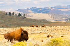 Yellowstone National Park, Montana and Wyoming