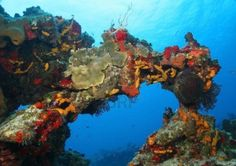 cozumel mexico - coral reef