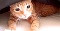 Making A Bed With Cats Around, Starring Cole And Marmalade! | The Animal Rescue Site Blog