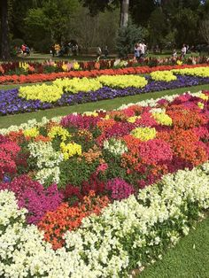 Toowoomba Carnival of Flowers 2015