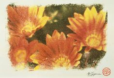 Flower of Venidium where my signature and the stamp were in