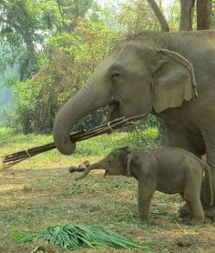 The Best Way to Celebrate Thai Elephant Day Is With an Adorable Baby Thai Elephant