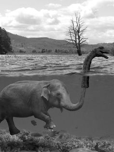 Elephant Humor: Now we understand more about the Loch Ness Monster? Lago Ness, Sneak Attack, Funny Commercials, Loch Ness Monster, The Loch, Elephant Love, Funny Elephant, Happy Elephant, Elephant Stuff