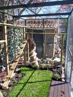 Outdoor Cat Cage, Outdoor Cats, Animal Room, Outside Cat Enclosure, Cat Fence, Cat Grass, Cat Cages, Cat Run, Cat Playground
