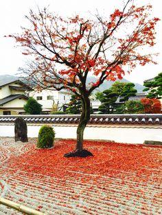 Koumyouzenji Fukuoka Dazaifu. autumnleaves