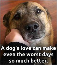 How to make your dog happier: The ultimate guide. 17 tried and tested ways to make your dog happier. Dog Quotes Love, Dog Quotes Funny, Dog Sayings, Sweet Dog Quotes, Dog Best Friend Quotes, Quotes Quotes, I Love Dogs, Puppy Love, Cute Dogs