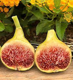 Del Sen Jaume Gran Growing Fig Trees, Fig Varieties, In The Flesh