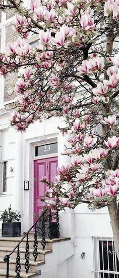 I would love to have a beautiful magnolia tree and that pink front door! Beautiful World, Beautiful Places, House Beautiful, Magnolias, Belle Photo, Knotting Hill, Beautiful Flowers, Flowers Nature, Spring Flowers