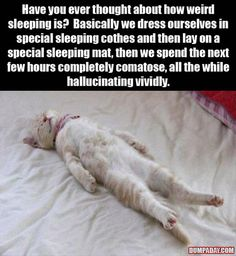 LOL!! Never thought of that! Dress ourselves in special sleeping clothes and lay on a special sleeping mat