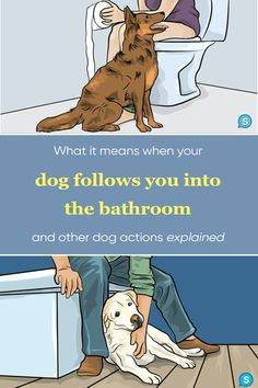 Dogs obviously can't talk, so they often have to find other ways to communicate what it is that they want or need. Some of their actions can seem a bit strange (like following you into the bathroom) but there is a chance that there is actually a good reason for that. If you're curious about some of your dog's strange behaviors, keep reading! Funny Dogs, Funny Memes, Hilarious, Awkward Funny, Animals And Pets, Cute Animals, Spotlight Stories, Good Jokes, Cute Guys