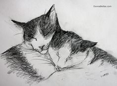 #Cat Nap Cuddle #Drawing Two #cats cuddle and use each other as a pillow during a cat #nap.  #Art is a pencil sketch. #CuteCats #CuteAnimals #PillowAnimals