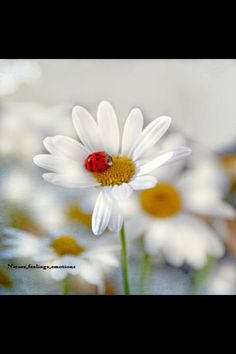 Lady bug. there is an innocence about this and yet it speaks volumes of bold. love it