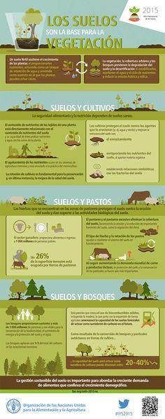 Los suelos constituyen la base de la vegetación
