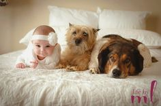a girl and her pups! life by ML, dogs and babies, baby, cairn terrier, mutt