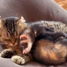 Cute Little Animals, Cute Funny Animals, Funny Cats, Cute Animal Videos, Funny Animal Pictures, Gato Gif, Cute Ferrets, Cute Cats And Kittens, Cool Pets