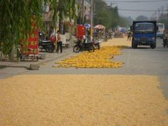 This is where your corn comes from, Henan streets.