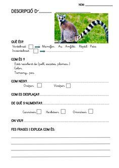 Texto descriptivo: fitxes-llibre-animals