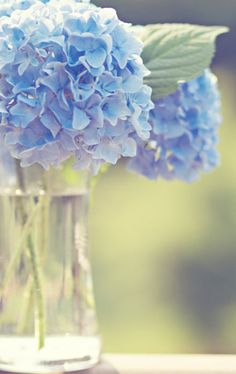 Hydrangeas, obsessed with them - especially the blue ones!