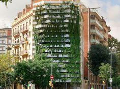Vegitecture: fachada verde en Barcelona. Embellecimiento de una medianera de Barcelona construyéndose una fachada de jardín vertical, con plantas colgantes fijadas a una estructura de acero galvanizado.      #General