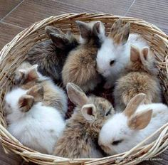 OMG! A basket of buns
